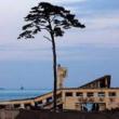 熊本の震災で振り返る芸能人の知られざる支援活動の数々